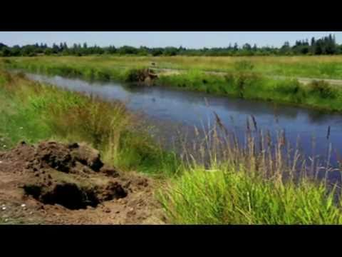 Following The Invasive Nutria In The Northwest