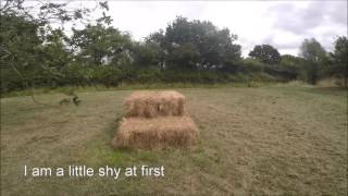 Dogs Trust Newbury - Penny