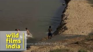 Young boys dive into Dhansiri river in Dimapur, Nagaland