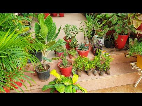 Lockdown Garden Shopping Haul With Names || Fun Gardening