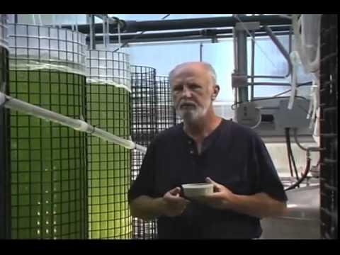 Marine Phytoplankton of Fytoplankton - Super Food van de toekomst