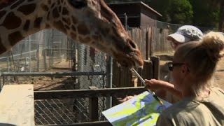 Oakland Zoo Animals Create Art For Auction