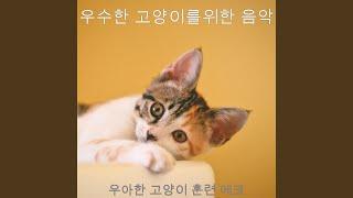 흥미로운 고양이 훈련 감정