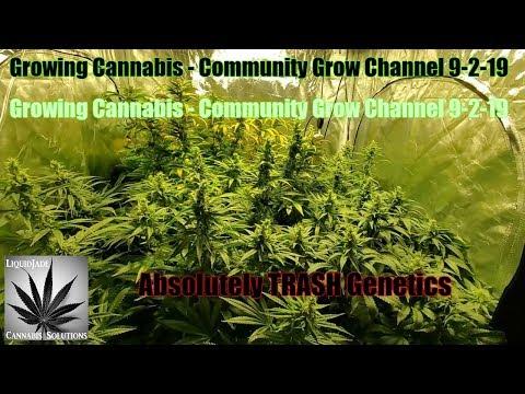 Growing Cannabis - Community Grow Channel 9-2-19