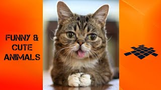 Cute And Funny Animals compilation l, TRY NOT TO LAUGH