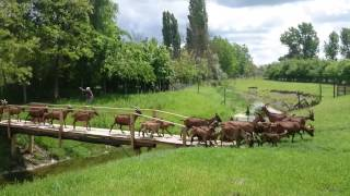Farma koza Male Pijace