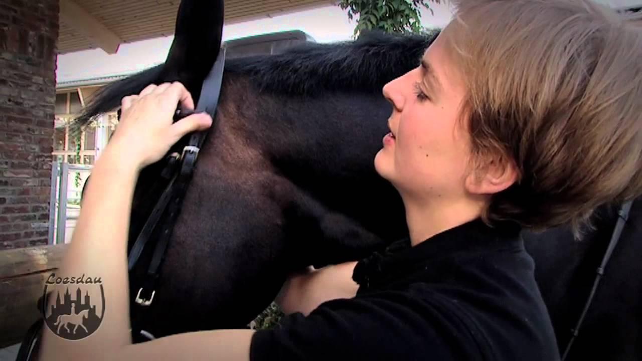 Verkaufspferde Norddeutschland Public Group | …