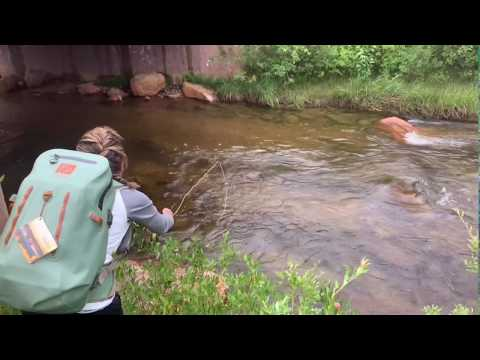 Dry Fly Fishing: Rocky Mountain National Park On Fall River, Colorado August, 2019