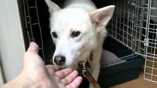 預かり犬「ホカ」いぬ親さん募集中! 保護犬の新しい飼い主さんを探すブ...