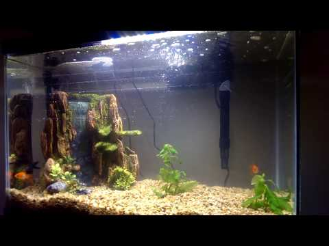 Marineland 20 Gallon LED Aquarium - REVIEW