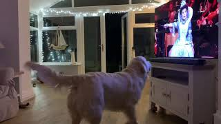 Opera Dog  Singing Dog  Queen of the Night  funny dog