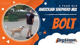 Bolt, Shipped Back By A Us Marine And Saved From War-torn Afghanistan! See His Story!
