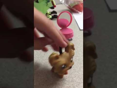 Lps Shih Tzu Open The Package In The Next Video Youtube