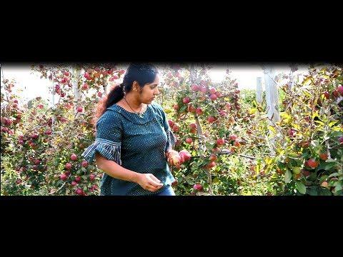 ന്യൂയോർക്കില്ലേ മനോഹരമായ ആപ്പിള് തോട്ടം||Apple Picking