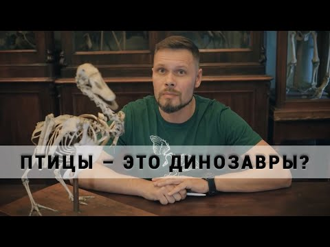 Птицы это динозавры? Рассказывает Павел Скучас