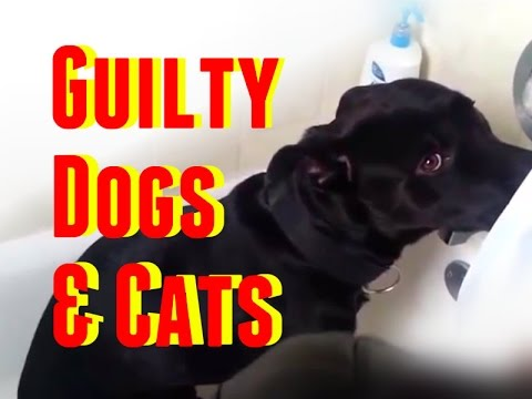 guilty-dogs-&-cats:-the-best-of-guilty-dogs-and-cats-compilation-2014---2015