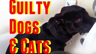 Guilty Dogs & Cats: The Best of Guilty Dogs and Cats Compilation 2014 - 2015