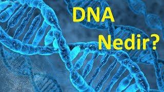 Dna Ve Genetik Mühendisliğin Geleceği