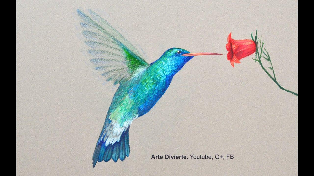Cómo Dibujar Un Colibrí Con Lápices De Colores Arte Divierte