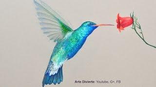 Cómo dibujar un colibrí con lápices de colores - Arte Divierte.