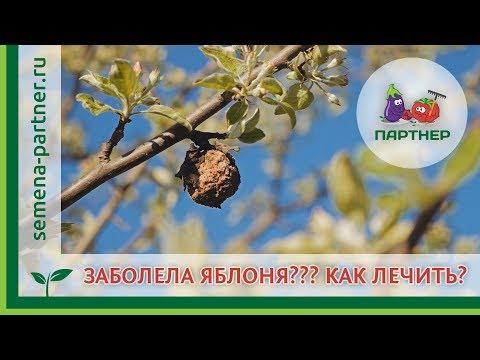 ЗАБОЛЕЛА ЯБЛОНЯ??? Как лечить? | урожайный | плодовую | плодовая | огороде | болезнь | яблоня | яблони | огород | лечить | голова