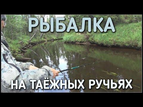 рыбалка / летом