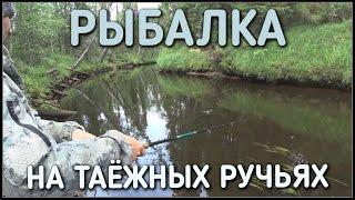 рыбалка / летом на таежных ручьях