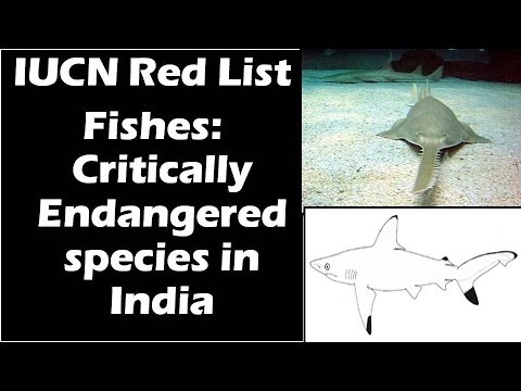 Fishes: Critically Endangered Species In India: IUCN Red List
