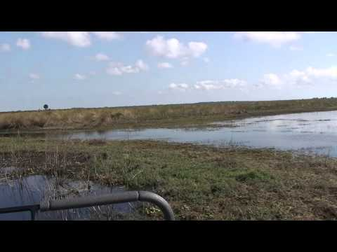 Florida Air Boat Excursion