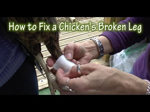 how to fix a broken back Psychologist dr guy winch, author of how to fix a broken heart, has  looking  back on a relationship in hindsight, it is easy for our minds to.