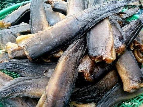 พาทำปลาดุกร้า(ตอนที่2 )|เพจปลาดุกร้าพัทลุงป้าจิตต์| ปลาดุกร้าทะเลน้อย