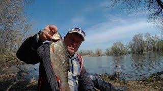 Ловля язя весной на поплавочную удочку. + Бонус: ловля плотвы на поплавочную удочку и уклейки