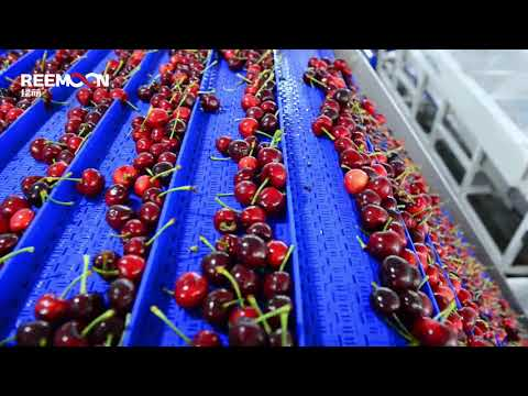 Cherry Sorting Machines, Cherry Sorter Washing Processing Sizing Lines. Cherry Grading Equipments