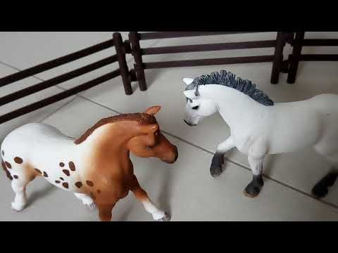 Neue Pferde neue Bekannte Folge 6 ( Letzte Folge)