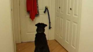 Does Your Dog Really Understand A Verbal Cue? Clicker Training