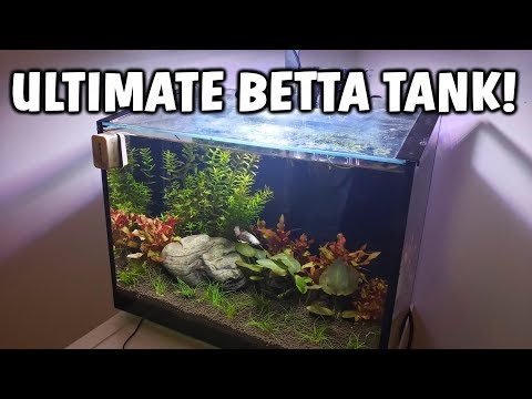 ULTIMATE Betta Fish Aquarium - Betta Fish Tank Care And Info