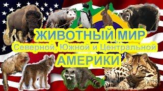 видео Как выглядит североамериканский опоссум