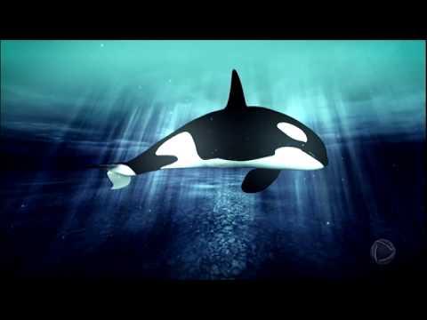 Baleias encalham nas praias brasileiras e especialistas tentam explicar os motivos