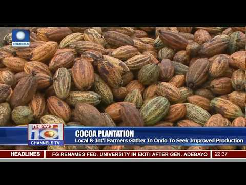 Local & Int'l Cocoa Farmers Gather In Ondo To Seek Improved