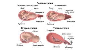 Женские РОДЫ по полочкам