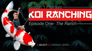 KOI RANCHING (Season 1: Episode 1) SelectKoi.com