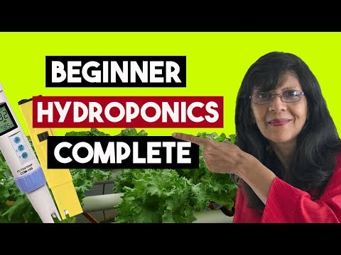 Hydroponics for beginners.All you need to know.