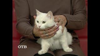 Знакомство с питомцами: кошка Юки ищет хозяев