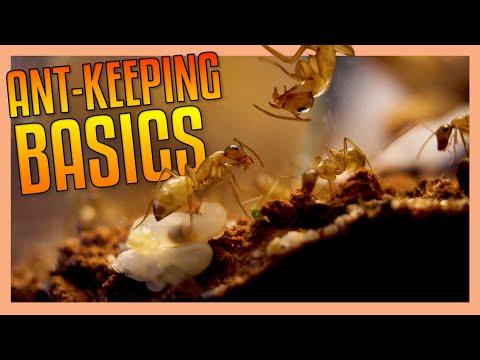 Ant Keeping Basics [TIPS & TRICKS]