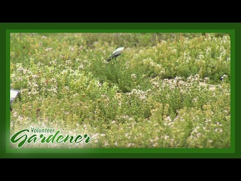 Herb Society of Nashville Display Garden | Volunteer Gardener