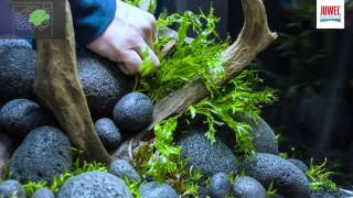 Juwel Aquarium Lido 120 Aquascaping Tutorial