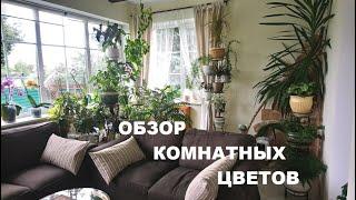 ОБЗОР МОЕЙ ОРАНЖЕРЕИ/КОМНАТНЫЕ РАСТЕНИЯ