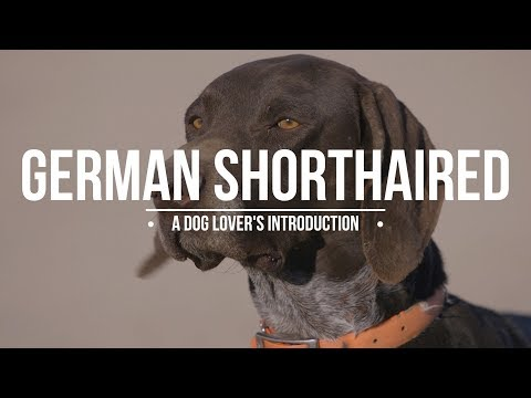 GERMAN SHORTHAIRED POINTER: A DOG LOVER'S INTRODUCTION