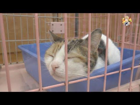 Кошки в Японии » Загадочные кошки