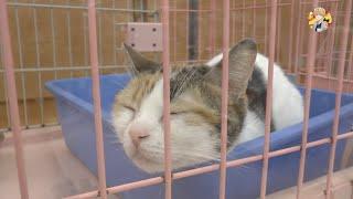 Зоомагазин в Японии. Стоимость Животных в Японии(, 2015-06-21T10:53:05.000Z)